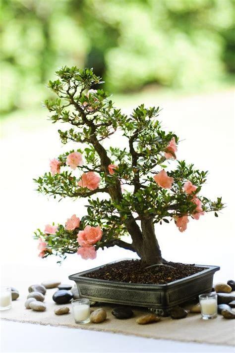 Bonsai tree wedding centerpiece   Ceremony Decor   Tree