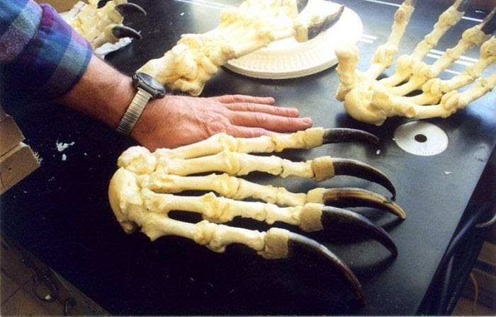 28 - Bear Claws Next To Human Hand