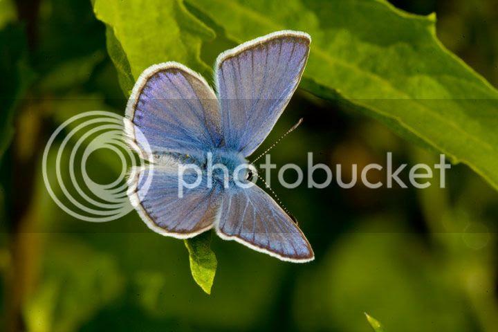 photo borboleta1_zpsd1d39d02.jpg