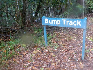 The Bump Track