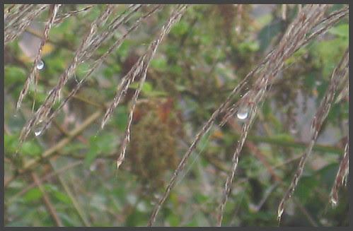 05 raindrops up