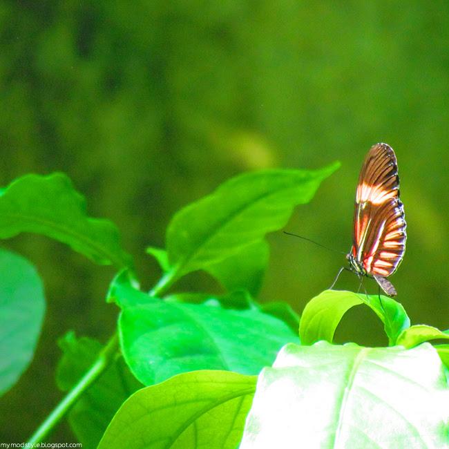 CincyZoo Butterfly