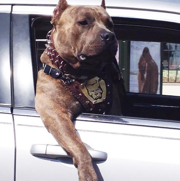 39. Guy size dog