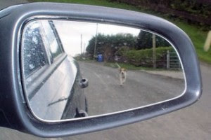 dog-chasing-car