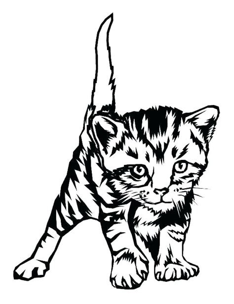 baby kitten coloring pages  getcoloringscom