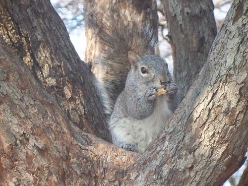 3.22.2009 Chicago Natura (12)