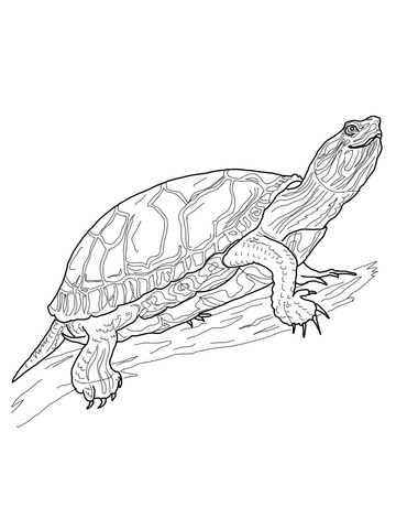 western painted turtle coloring page  free printable coloring pages