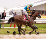 american Pharoah winning the Preakness