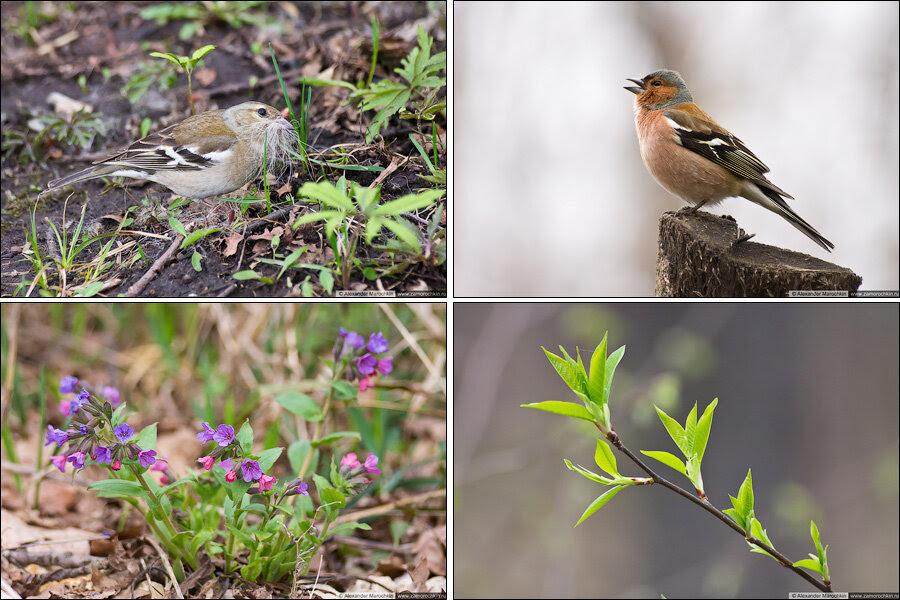 Природоведение: флора и фауна городского парка