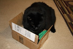 Huggy Bear trying the box out