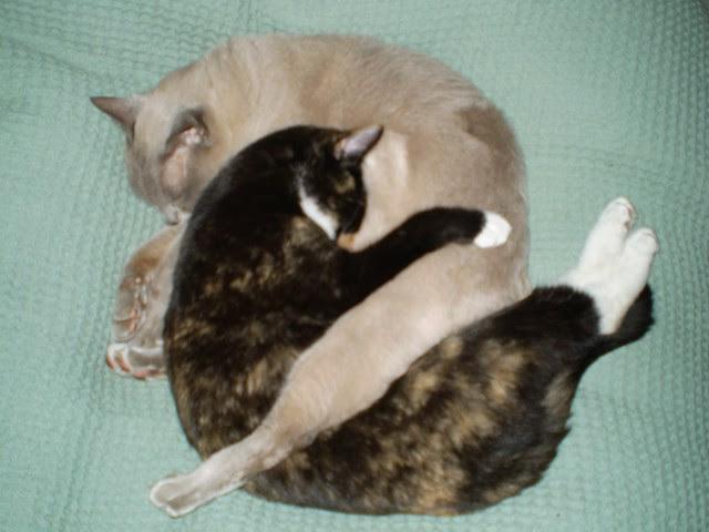 Yin/Yang kitten snuggling!