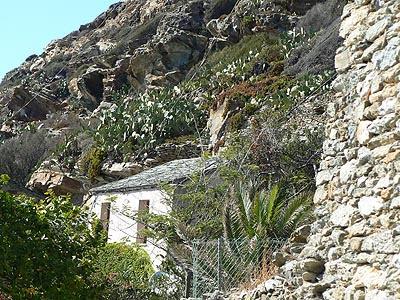 cannelle à flanc de rocher.jpg