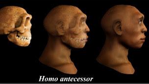 homo antecesor