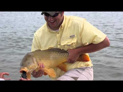 Fly carpin carp fly fishing guides illinois for Chicago fly fishing outfitters