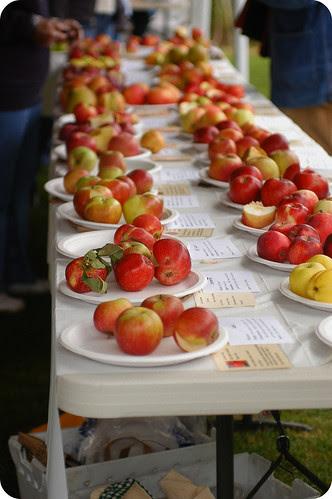 apple tasting at the cider festival