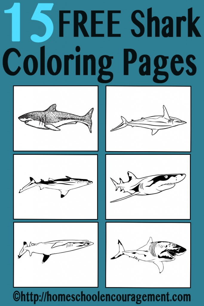 FREE Shark Coloring Pages | Free Homeschool Deals
