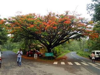 മനോഹരമായ ഡച്ച് റോഡ് ജങ്ക്ഷന്