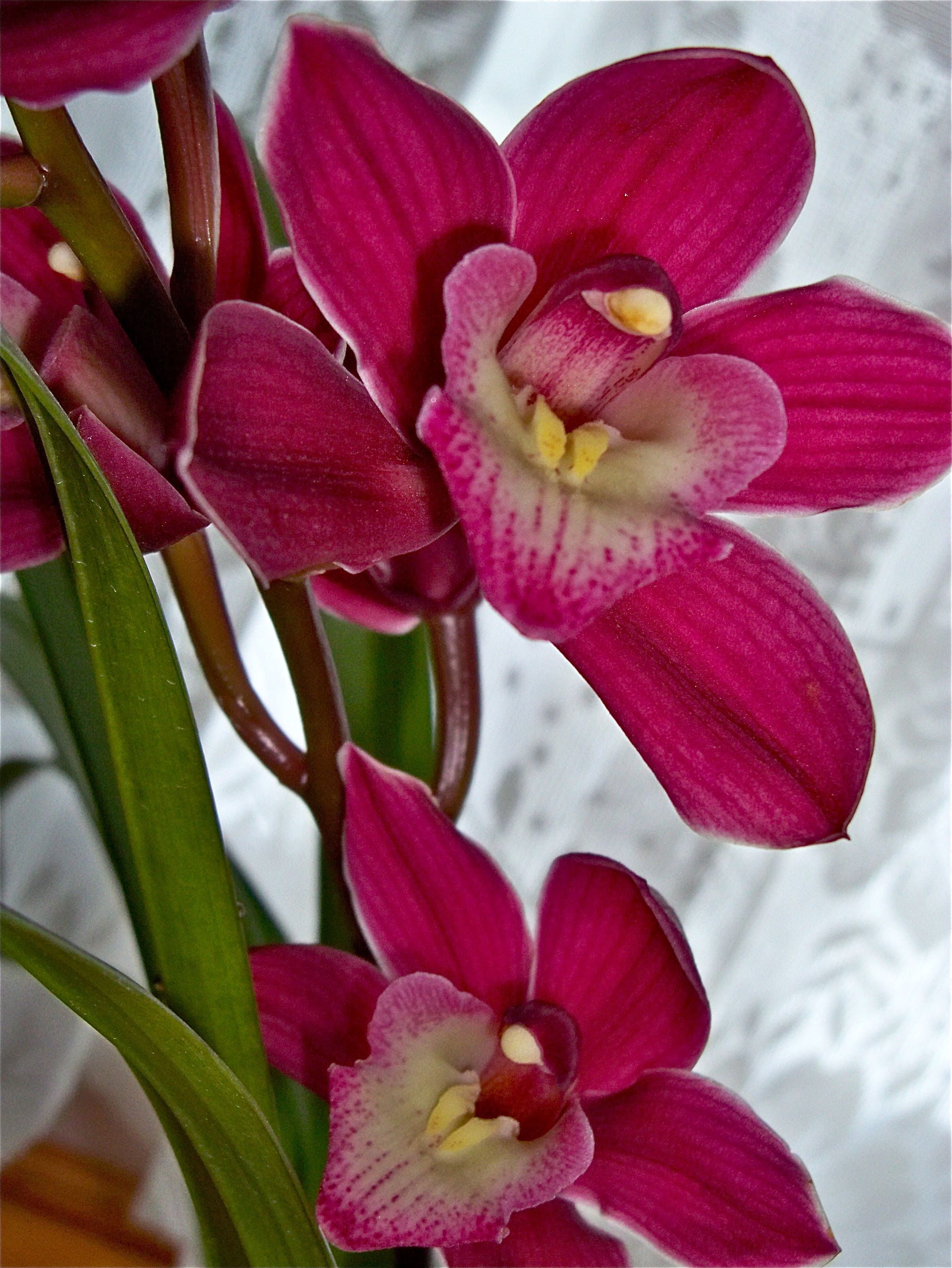 Orchid Plant Types