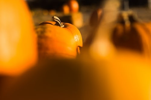 Butternut squash soup to fall to the ground