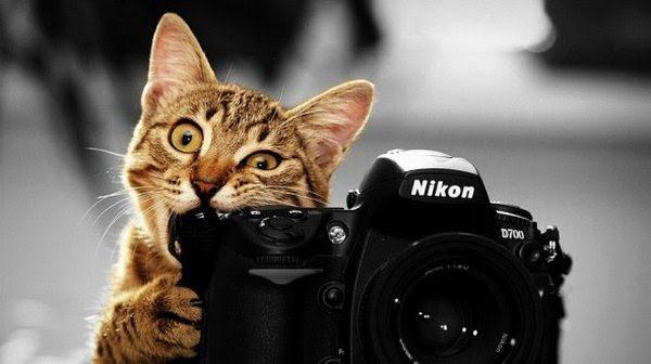 Kumpulan Koleksi Gambar Wallpaper Binatang Lucu Gratis Terbaru