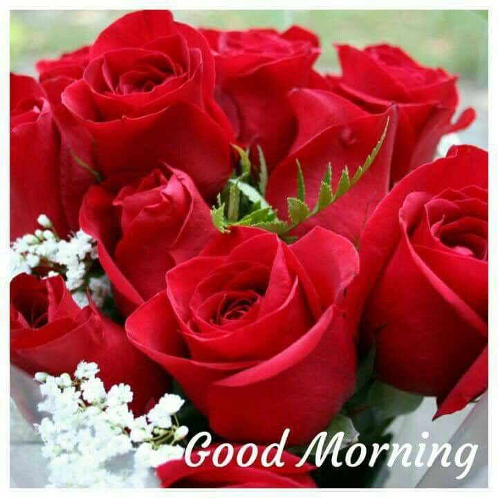 Good Morning Beautiful Red Rose Image Daily Health