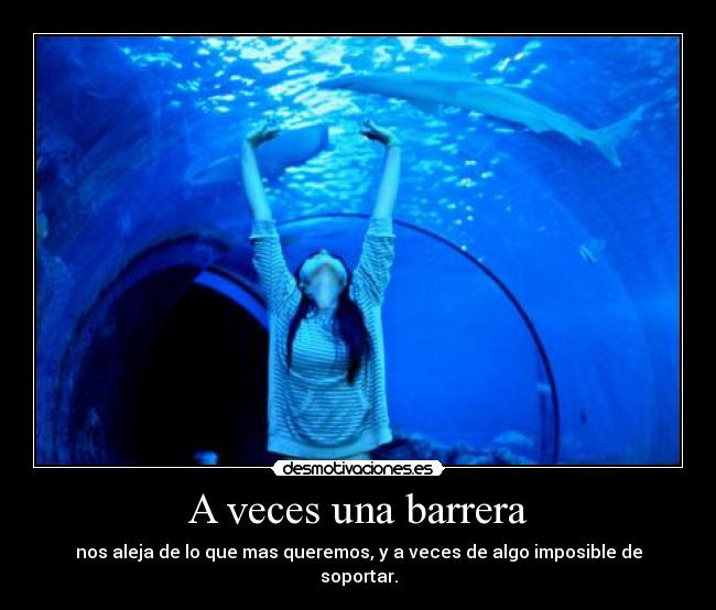 Frases Delfines Amor Imagui