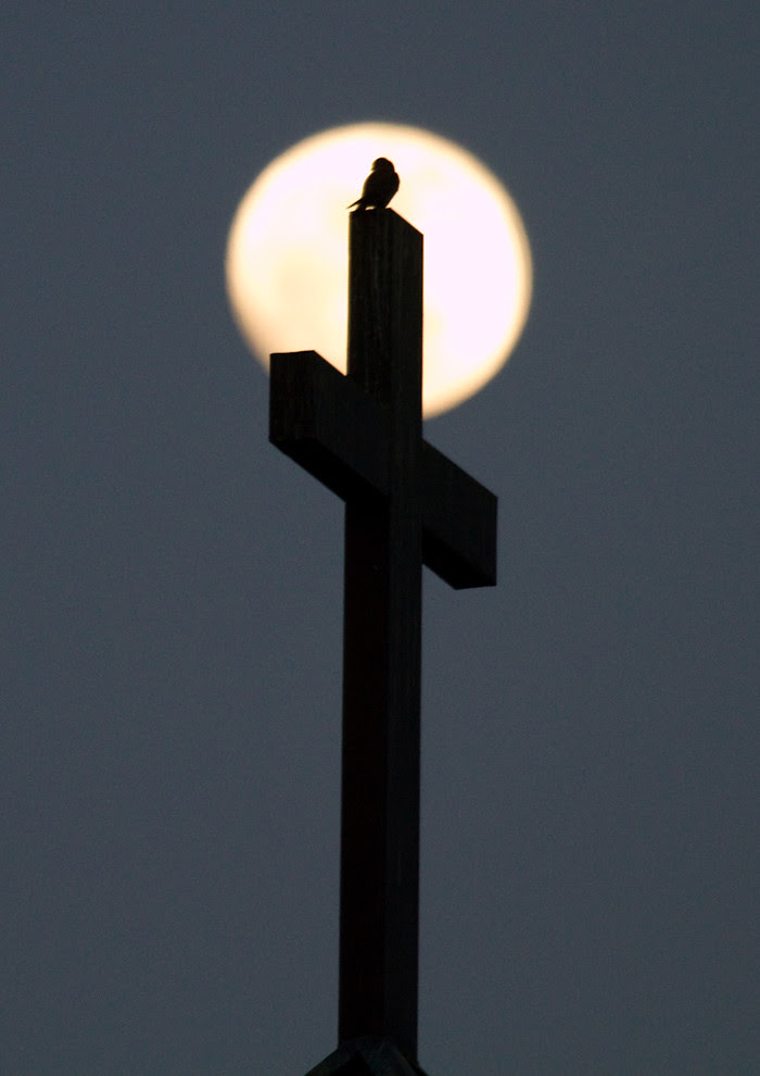 A Cross between a Kestrel and the Moon