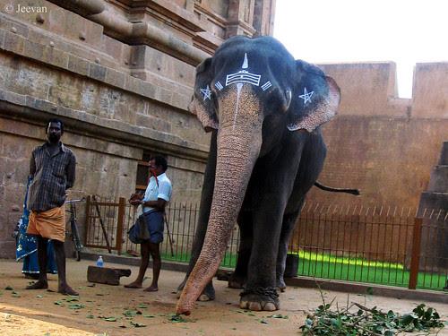 RIP Vellaiyammal, The Big Temple Elephant