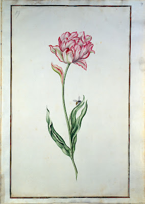 18th century flower painting