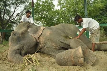 O animal está em processo de reabilitação