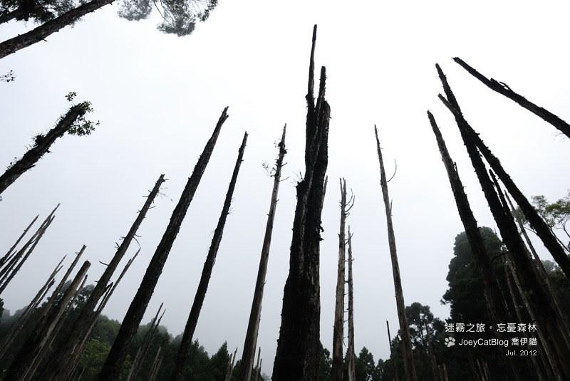 2012_0715_迷霧之旅。初訪忘憂森林DSC_5045