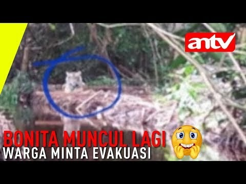 Harimau Meneror Lagi ... Warga Minta Evakuasi