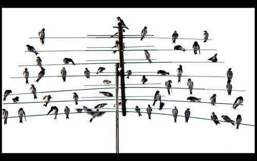 Música para olhar by Renata_Pancich