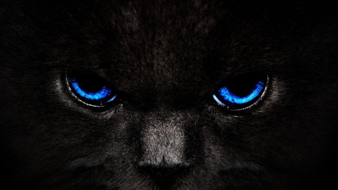 Black Cat Animals Black Blue Eyes Cat Hd Animals 86