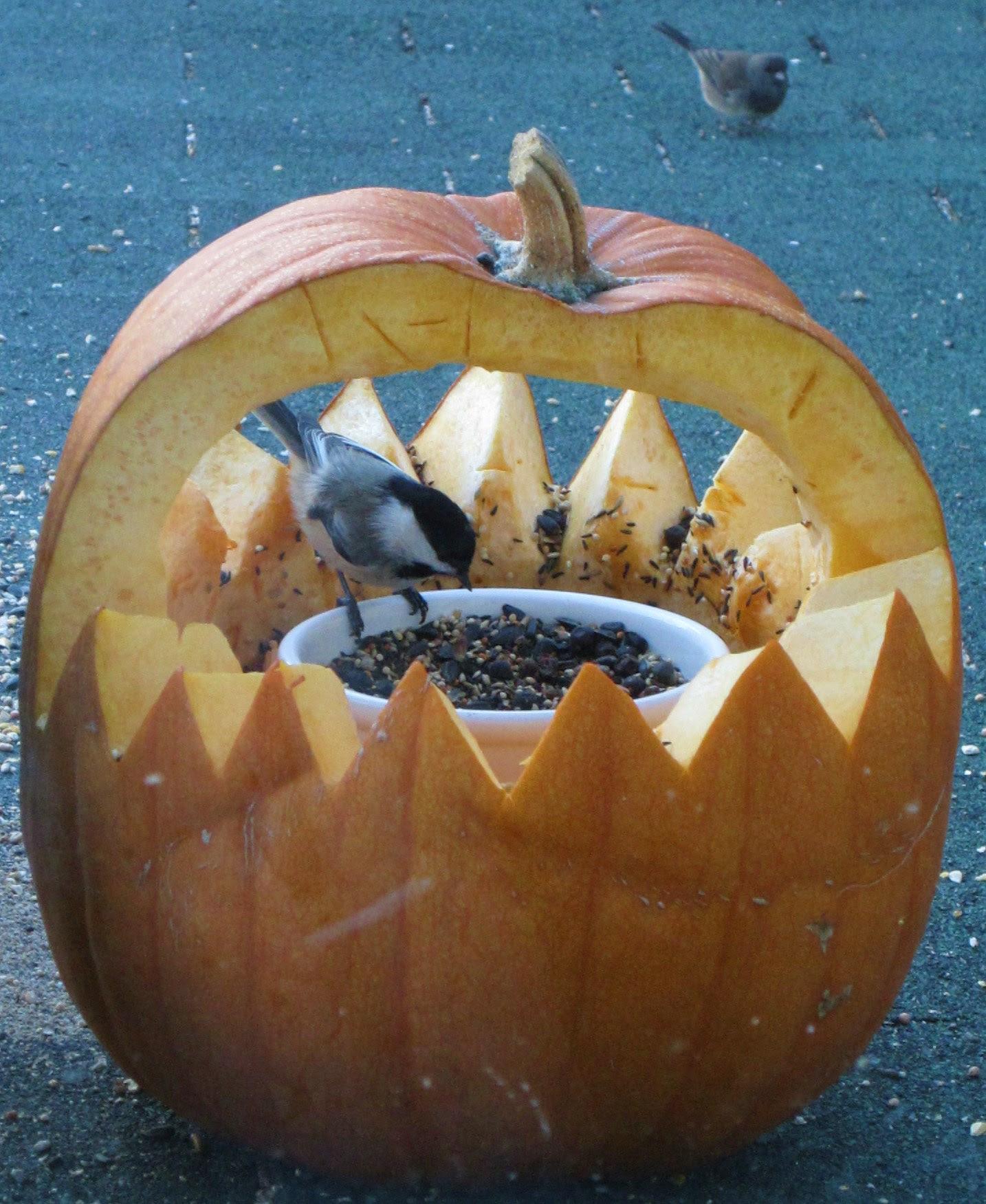 Chickadee at Pumpkin Feeder