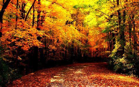 autumn images autumn wallpaper hd wallpaper  background