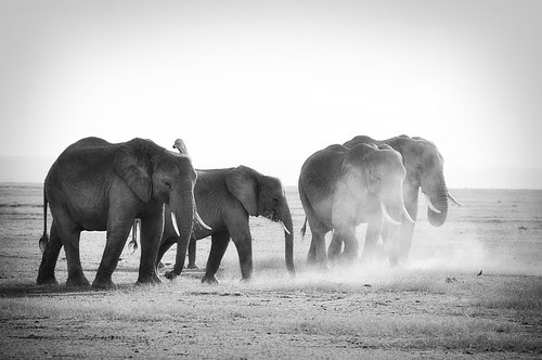 ElephantFamilyDustBath