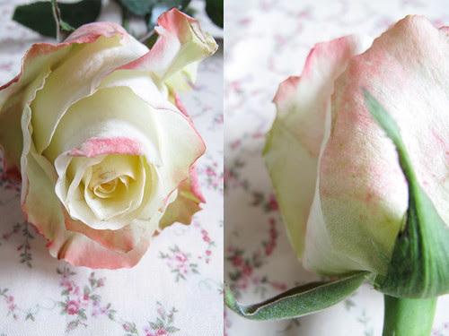 Collage_rosa1
