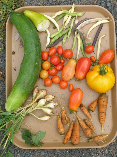 One Evening's Harvest