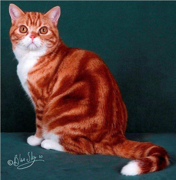 Unduh 89+ Gambar Kucing Sedang Duduk Keren Gratis