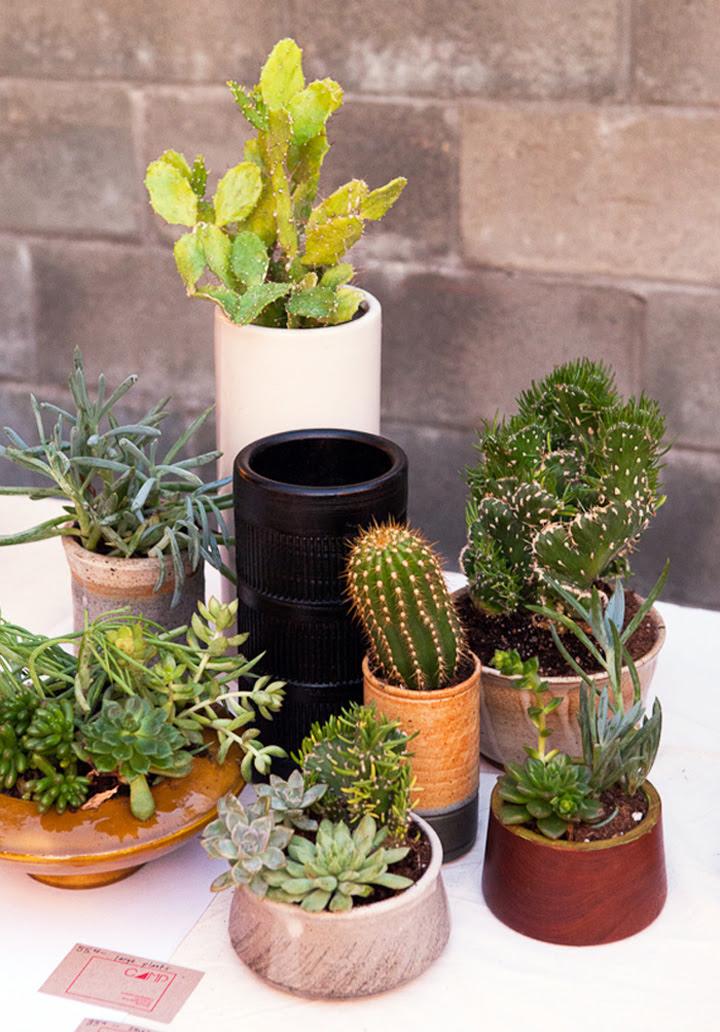 The Koenigs Create: 15 Beautiful Indoor Cactus Gardens