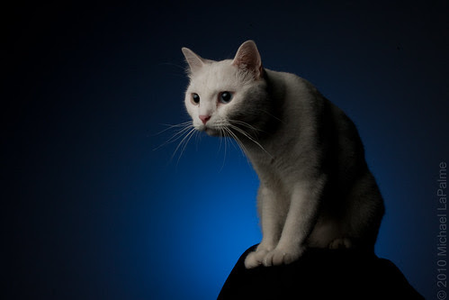 """My """"Good Luck"""" Khao Manee Cat"""