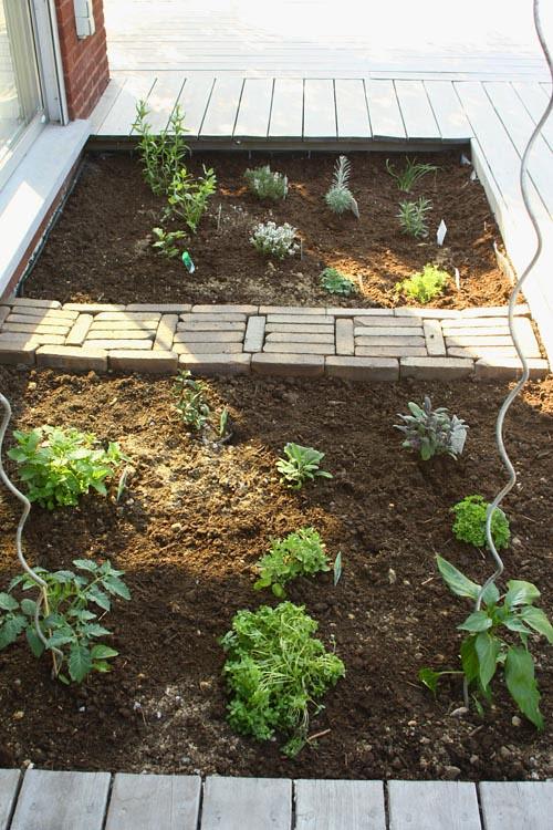 my herb 'garden'