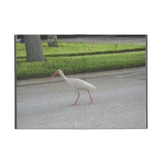 Ibis Walking