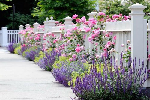Landscaping Plan Landscaping Ideas Using Knockout Roses