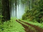 las zielony1