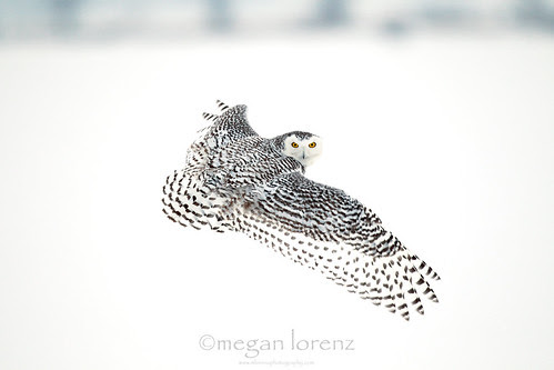 Keeping My Eyes On You! by Megan Lorenz