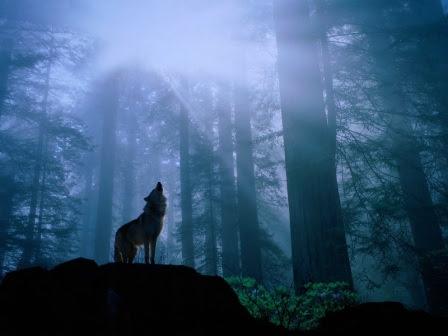 Aullido Y Vocalización De Los Lobos Lobopedia