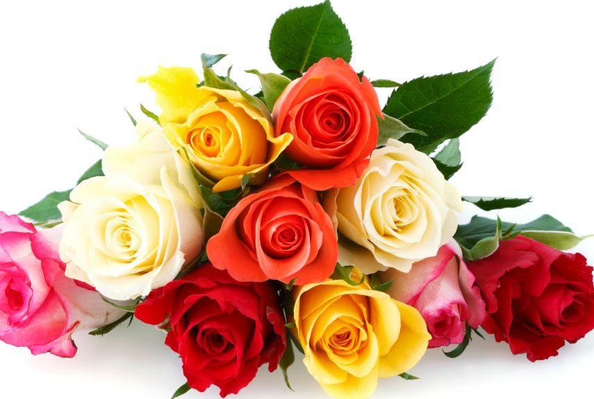 Tipos De Flores Bonitas Rosas Imágenes Y Fotos