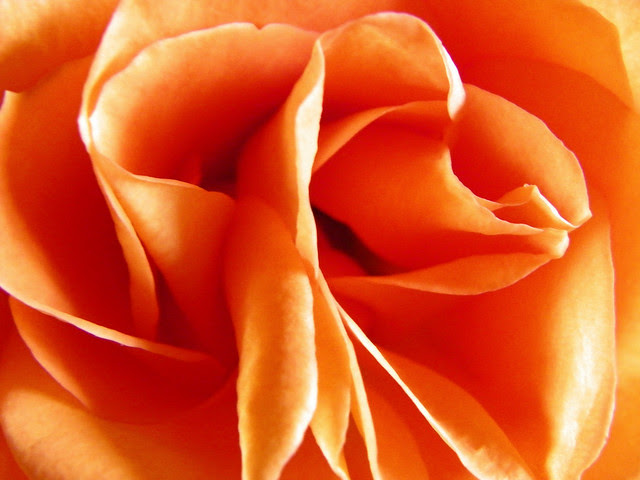 Love Pulsates Like A Neon Rose